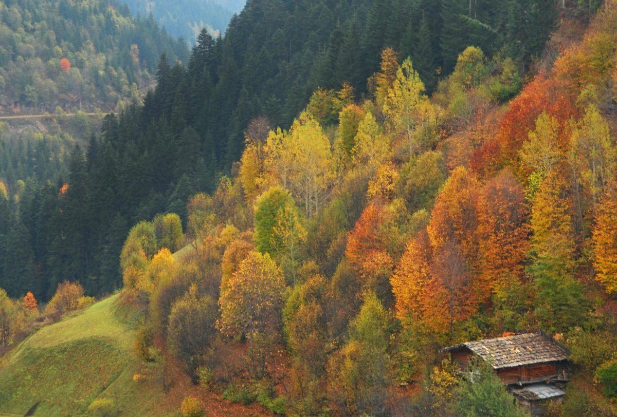 Papart Ormanları -  Sonbaharda Gezilecek Yerler