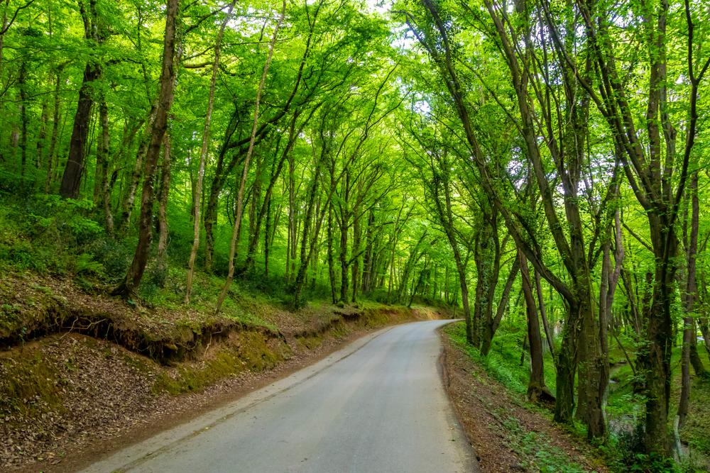 Belgrad Ormanı Tarihi