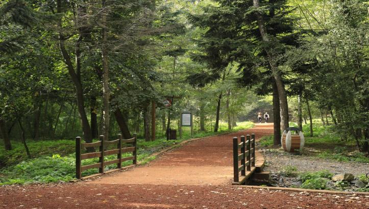 Belgrad Ormanı Yeme-İçme